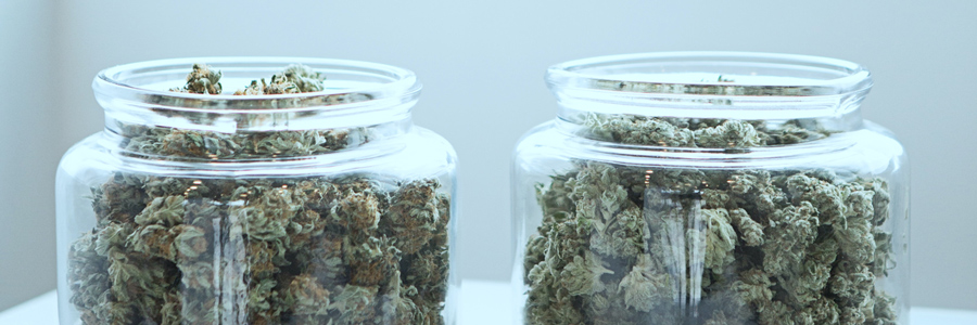 an image of 2 large glasss jars side by side, filled to the brim with cannabis flower.
