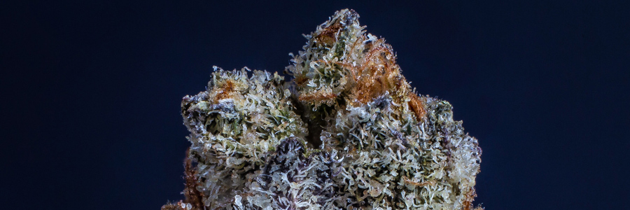 A close up of a cannabis flower